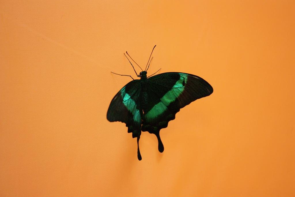Ночная Бабочка Приглашает В Гости